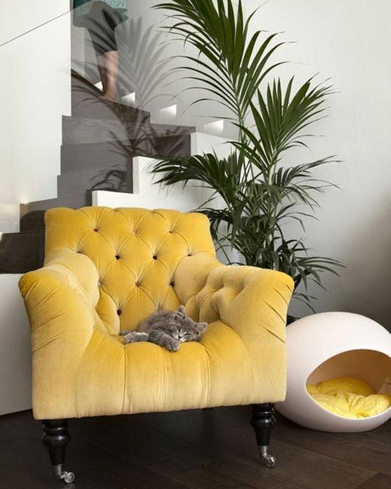 fauteuil velours jaune capitonné