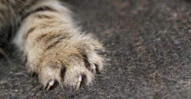 protéger son canapé de griffes de chat